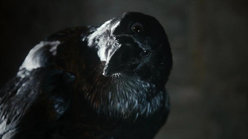 corvo de 3 olhos drunkwookieblog